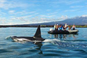 Panga ride in Galapagos