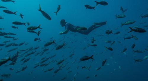 Guía de actividades en las islas Galápagos