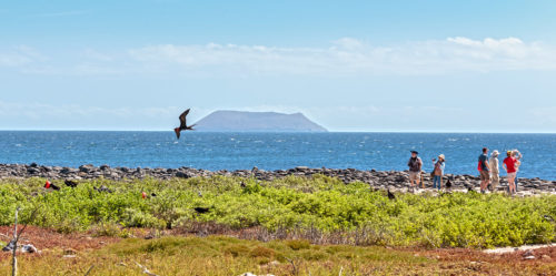 Frigatebirds in the Galapagos Islands. Coronavirus tips travel for you