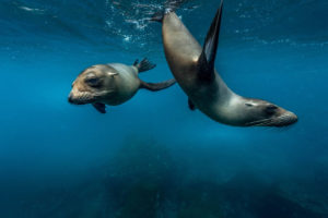 Sea Lion Galapagos Basics