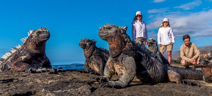 Explorers admiring marine iguanas in the Galapagos Islands, a remote destination to visit