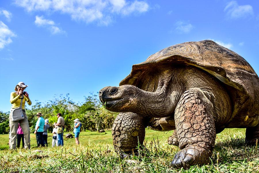 Galapagos Giant Tortoise Reserve