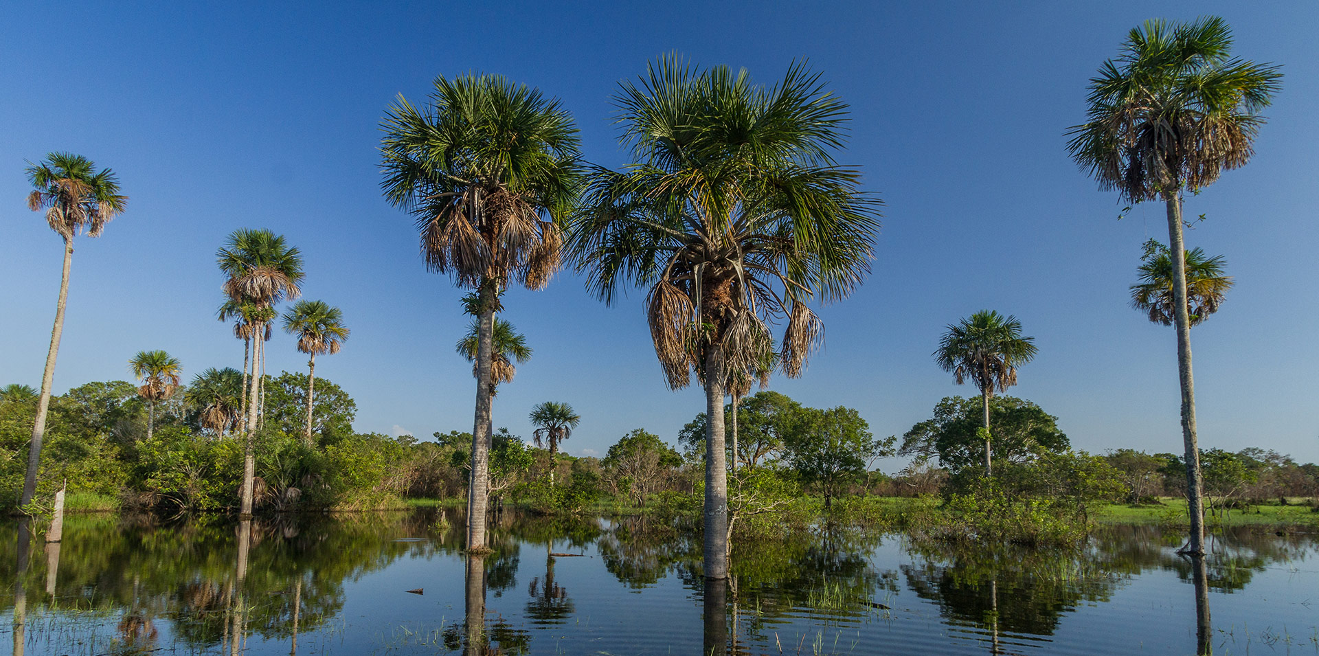 Hidden Gems in South America: Los Llanos Colombia