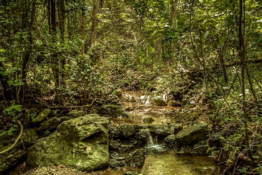 hidden gems for nature lovers in south america: Churute Mangroves Ecological Reserve in Ecuador