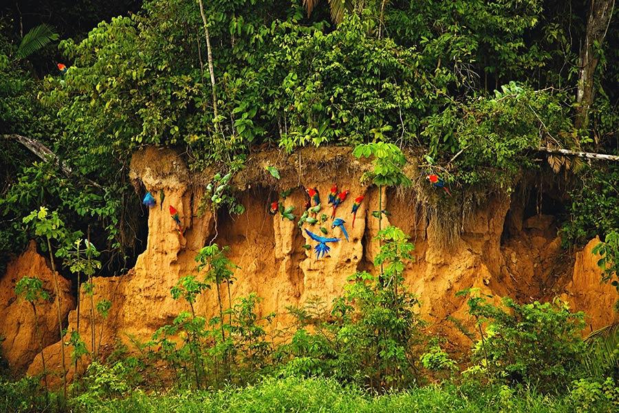 Top best off the beaten path spots in South America: Tambopata National Reserve in Peru