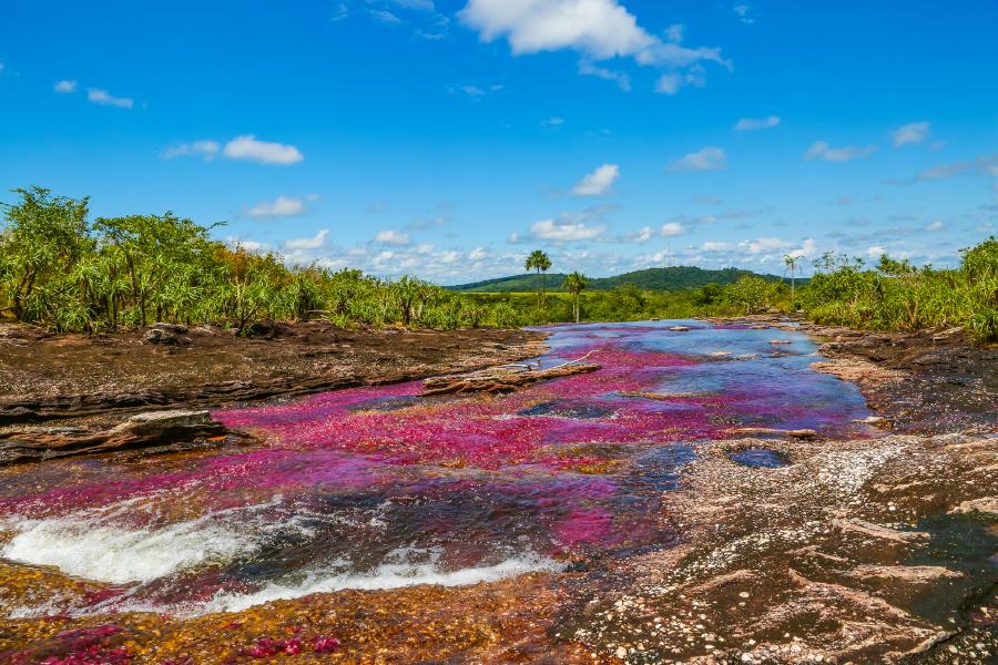"The majestic ""River of the 5 Colors"" in la Macarena region"