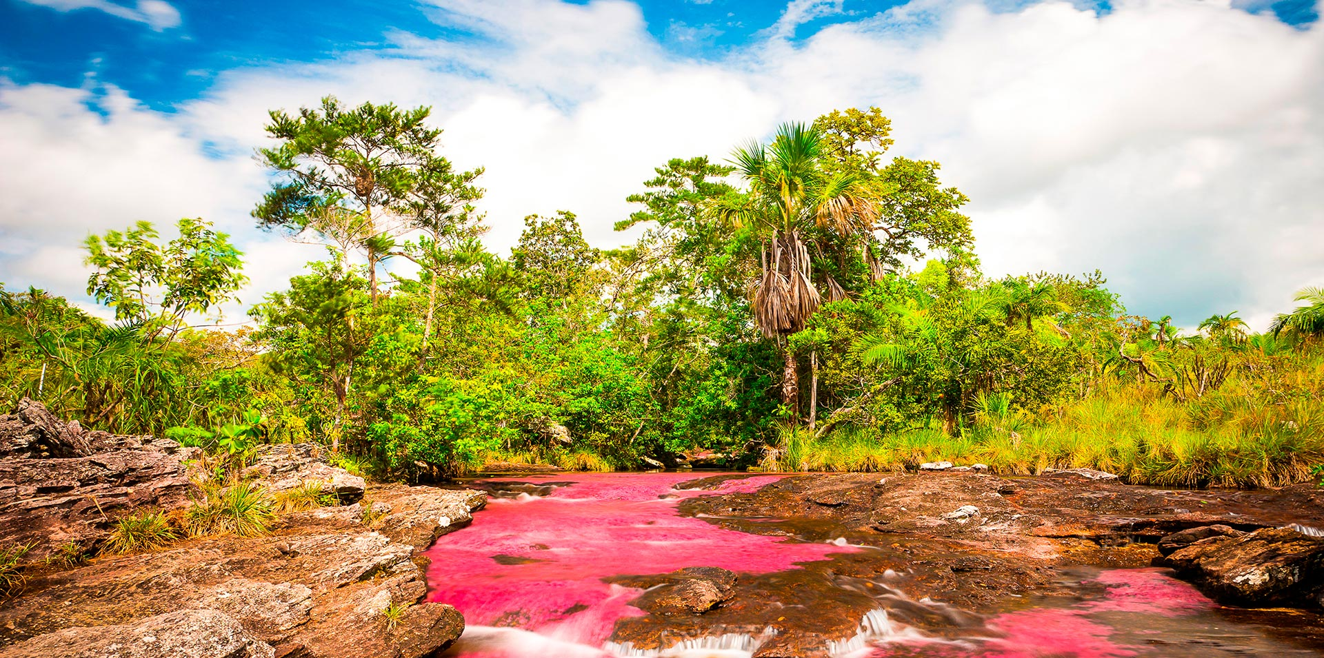 Colombia's River of the Seven Colors in full bloom